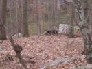 Nj State Line Trail Bear Sighting by river1 in Section Hikers