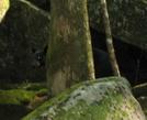 Gsmnp Bear by sheepdog in Bears