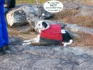 Dog Pack2 by twentybelow in Gear Gallery