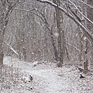 Snow in Shenandoah Nat'l Park ~2-5-2012 by johnnybgood in Trail & Blazes in Virginia & West Virginia