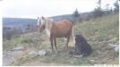 Blondie & foal... by Hammock Hanger in Views in Virginia & West Virginia