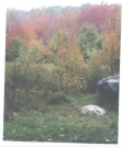 Fall Foliage from Old Orachard Shleter by Hammock Hanger in Views in Virginia & West Virginia
