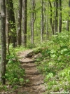 Trail section 4 BMT in May