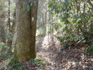 Trail View by HikerMan36 in Trail & Blazes in North Carolina & Tennessee