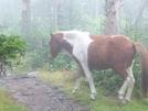 All The Pretty Horses! by HikerMan36 in Trail & Blazes in Virginia & West Virginia