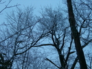 Cold Trees!! by HikerMan36 in Other