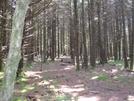 Unaka Mtn. by HikerMan36 in Trail & Blazes in North Carolina & Tennessee