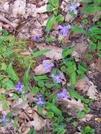Flowers by HikerMan36 in Flowers