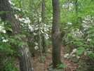 Flowers Between Ashfield Rd And Lehigh Gap .. by darkage in Trail & Blazes in Maryland & Pennsylvania