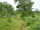 This Hike Was So Peacefull ... by darkage in Trail & Blazes in Maryland & Pennsylvania