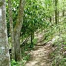 Greasy Creek Gap