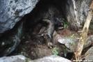 dead moose in Mahoosuc Notch