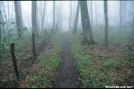 Foggy trail in NC by The Old Fhart in Trail & Blazes in North Carolina & Tennessee