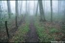 Foggy trail in NC