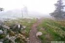 Frosty trail near Rhododendron Gap, Mt. Rogers