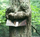 Smiling tree eating sign