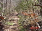 Rhododendron Trail--cornelia, Georgia