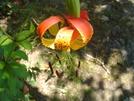 Flower On Springer 8/8/08 by Bulldawg in Trail & Blazes in Georgia