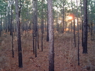 Sunrise On The Florida Trail by Chenango in Florida Trail
