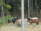 Trail Ride, Anyone? by HikerChick2008 in Other Trails