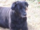 Best Friend by CrumbSnatcher in Thru - Hikers