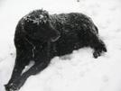 Bear------off Season by CrumbSnatcher in Thru - Hikers