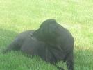 Bear by CrumbSnatcher in Thru - Hikers