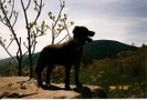 Scan0022 by CrumbSnatcher in Thru - Hikers