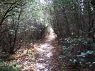 Jan 9, 2008  Hike Cat Gap Loop And John Rock 002 by gungho in Section Hikers