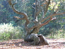Old Tree On At by MoBill122 in Other