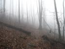 Gooch Gap by MoBill122 in Trail & Blazes in Georgia
