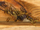 Yellow Jackets by MoBill122 in Other