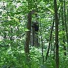 Baby bear in a tree by markc7 in Bears