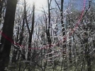 After The Ice Storm, Near Dick's Dome Shelter by Tweeger in Virginia & West Virginia Shelters