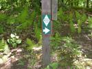 Mst by See Bee in Benton MacKaye Trail