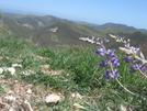 Montana De Oro 03/31/2008 by Mzee in Flowers