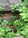 Copperhead Den