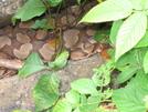 Copperhead Den