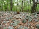 7 Miles Of Rock Garden In Pa S. Of Fox Gap