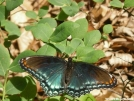 Lepidoptera by MedicineMan in Other