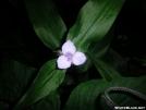 Mystery wildflower