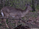 Frindly Whitetail by MedicineMan in Deer