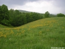 Pastural view 2m n. of TN Hwy91 by MedicineMan in Views in North Carolina & Tennessee