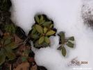 Laurel/Azelea/Rhdo's by MedicineMan in Flowers