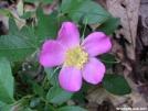 Wild Geranium by MedicineMan in Flowers