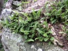 Rock/Fern by MedicineMan in Flowers