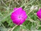 Please Identify... by MedicineMan in Flowers