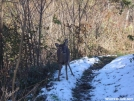 How dare you walk on my trail :) by MedicineMan in Views in Virginia & West Virginia