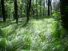 Grasses Before Ash Gap by MedicineMan in Views in North Carolina & Tennessee