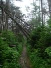 Between Roan High Knob And Carvers Gap